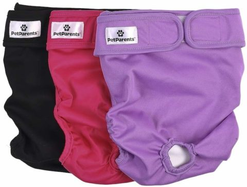 Pet parents Dog diapers-The best and messy-free dog diapers