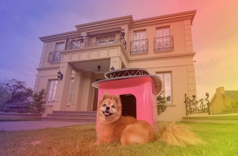 Best Indoor & Outdoor Pet Houses