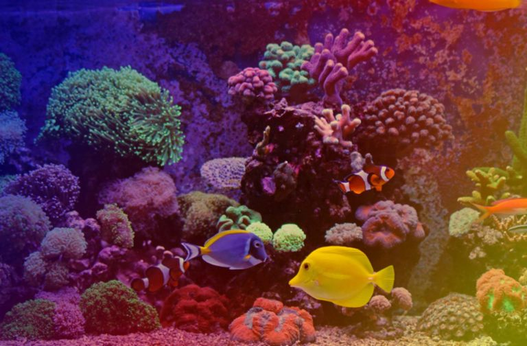 Best Fish Tank Accessories & Decorations